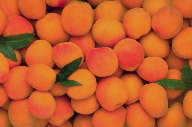 Fruits de saison  Abricots