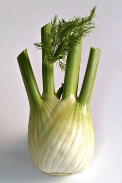 Fenouil diet thique - Legumes de saison septembre ...