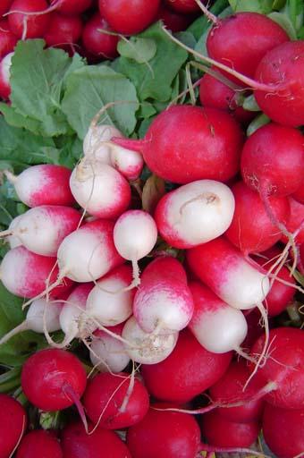 Radis diet thique - Legumes de saison septembre ...