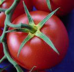 Tomate (Ouest, Midi)