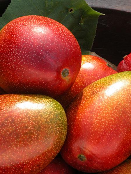 Mangue diet thique - Fruit de saison decembre ...